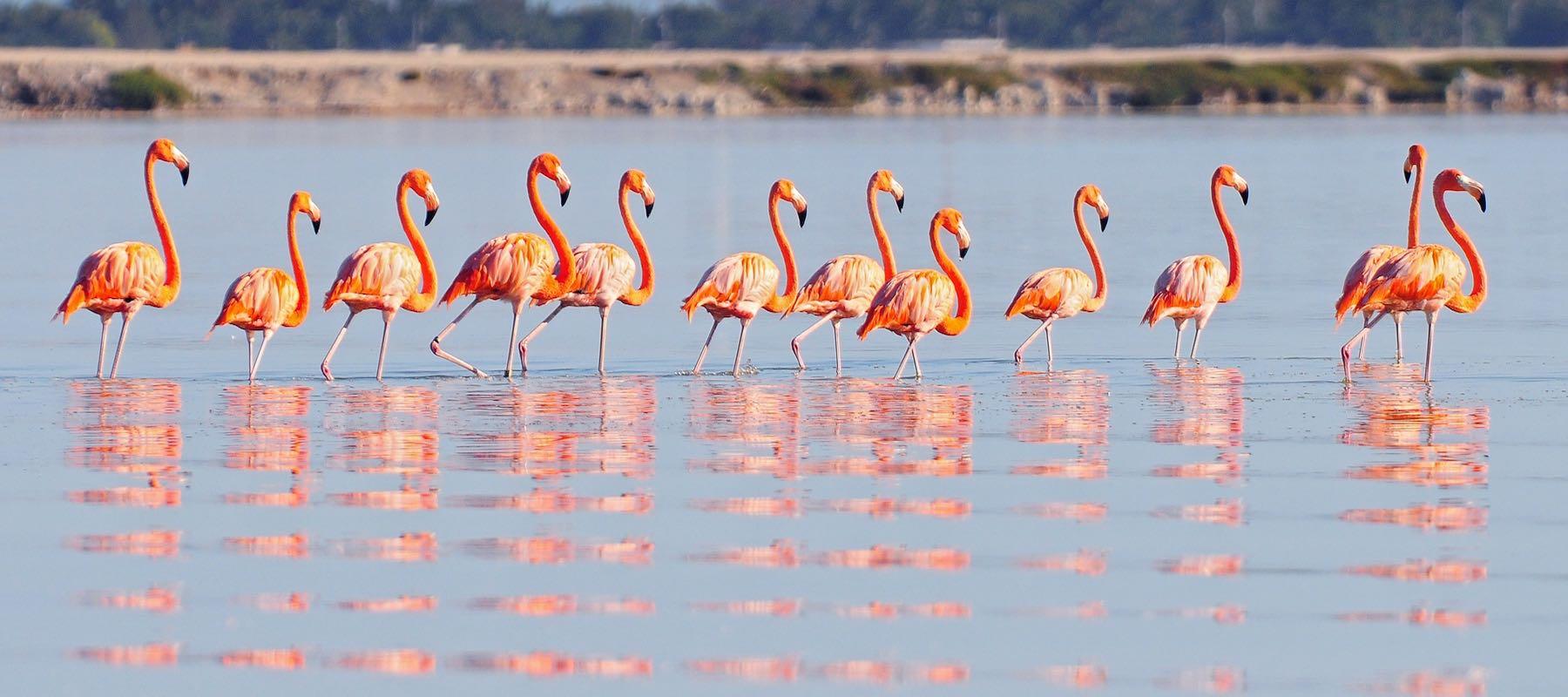 Flamingo Rio Lagartos ORIG copy 2