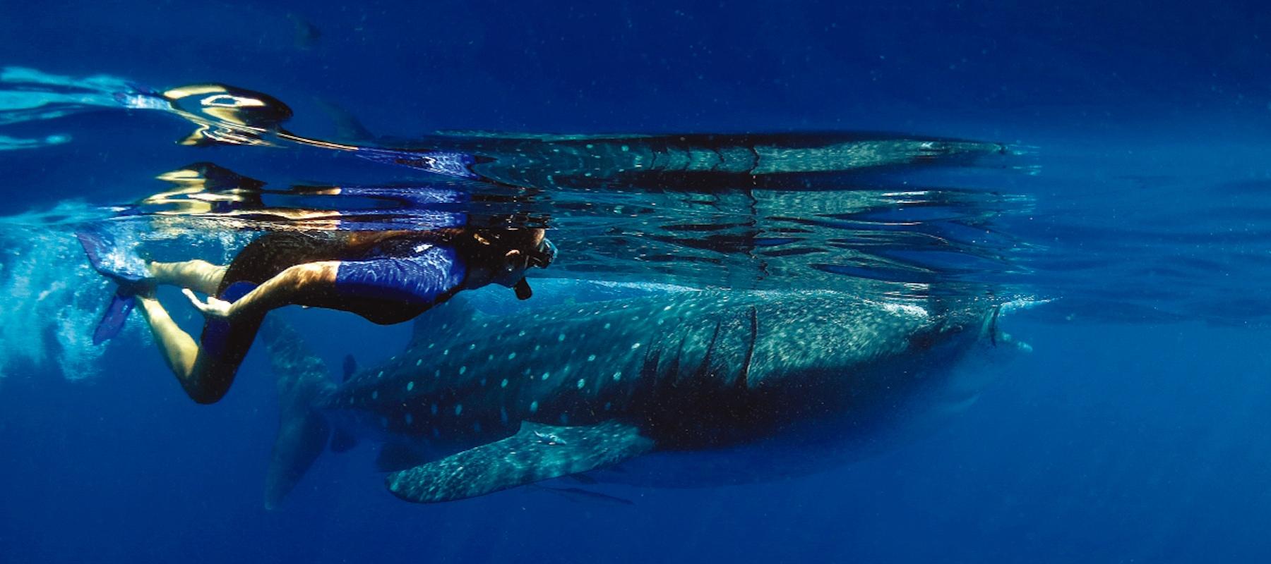 WHALE-SHARK (51) 1800x800